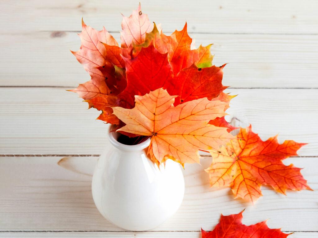 Vaso con foglie